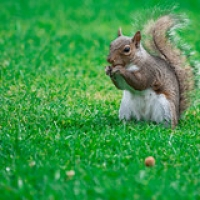 "squirrel and nut • <a style=""font-size:0.8em;"" href=""http://www.flickr.com/photos/69662603@N06/28402774486/"" target=""_blank"">View on Flickr</a>"
